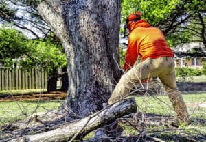 Things to Look For in a Tree Service Company in Omaha