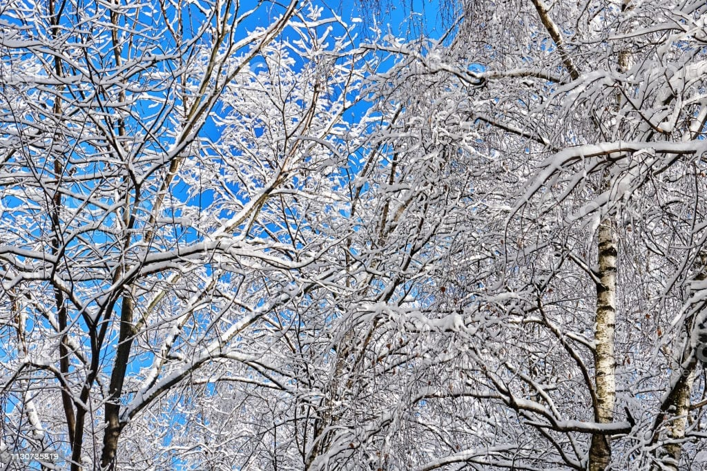 keep your trees safe in the winter