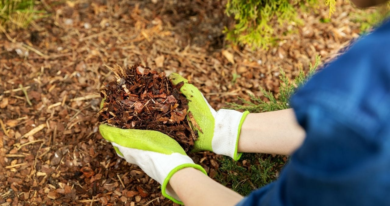 Best time to buy mulch